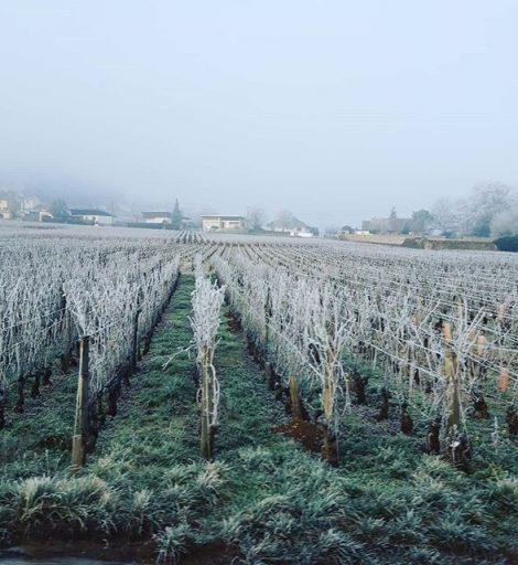 vigne gevrey